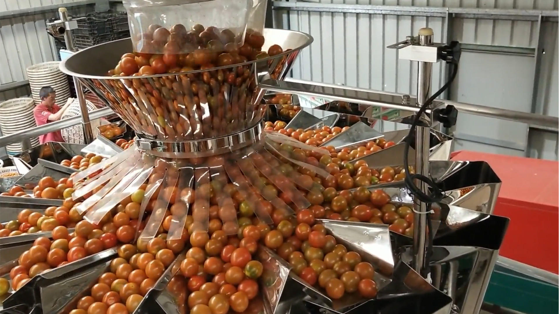 Automatic box packaging machine for tomatoes